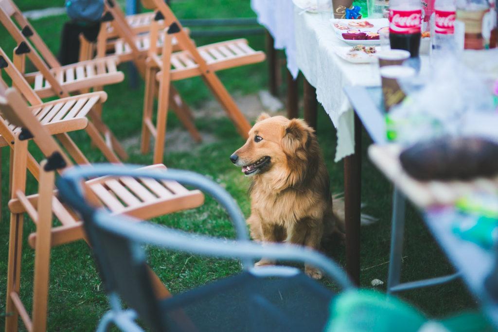 dog friendly birmingham alabama