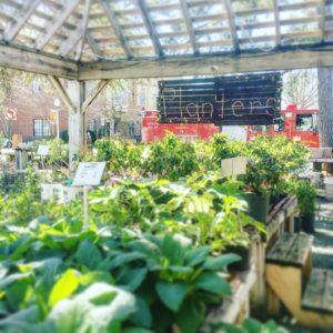 Oak Street Garden Shop