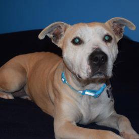 Butterball adopt a dog