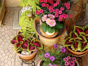 container gardening for porch or patio